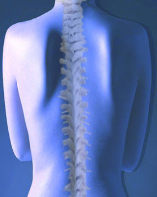 X-Ray of Spine