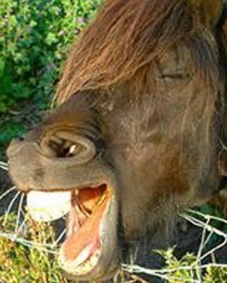 Donkey's teeth